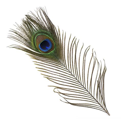 peacock feather rubber st peacock feather 8 15 quot 25pcs