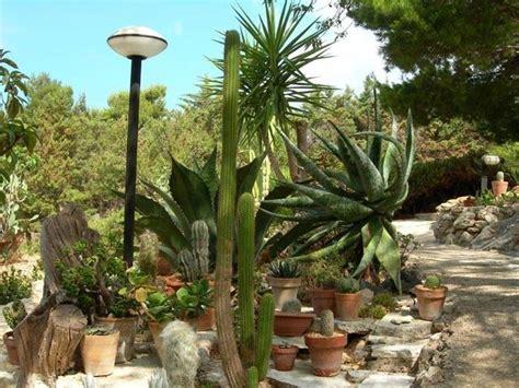 piante grasse in giardino giardini piante grasse piante grasse realizzazioni con