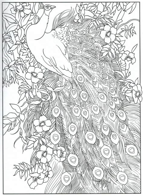 coloring pages for adults peacock 124 best images about kolorowanki dla dorosłych on