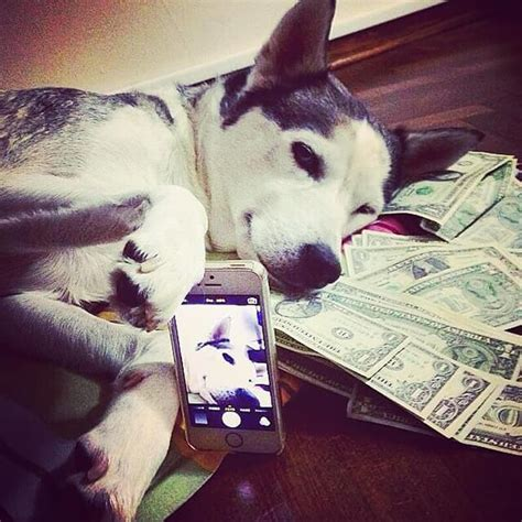 instagram dogs rich dogs of instagram profile is the best thing