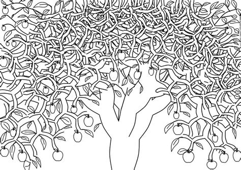 Free Printable Adult Coloring Pages Tree Coloring Page For Adults