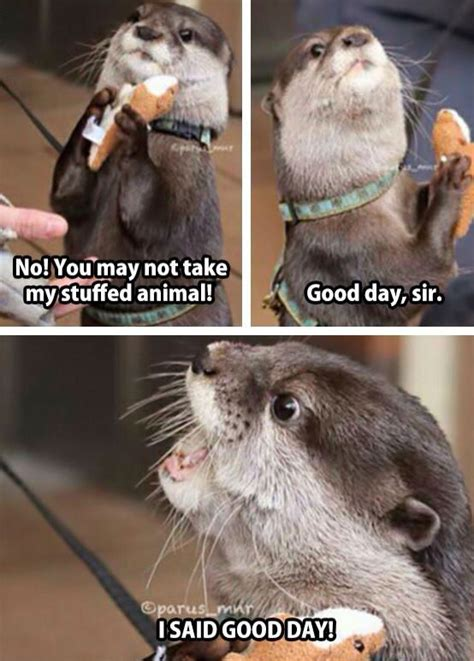 Good Day Sir Meme - 34 best images about otters on pinterest western