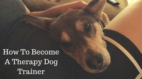 tips    therapy dog trainer  modern dog trainer