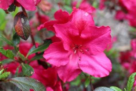 flowering shrubs for afternoon sun great plants for shade gardens hgtv