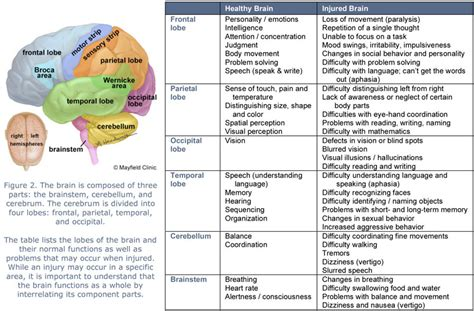 the human frontal lobes third edition functions and disorders science and practice of neuropsychology books brain lobes and function chart figure 2 the brain is