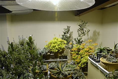 best plants for basement apartment country gardener no more houseplants