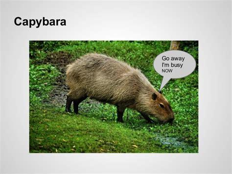 aec illuminazione listino prezzi capybara gem wowkeyword