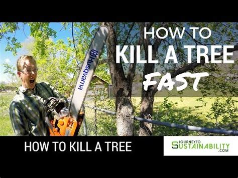 how to kill a bush how to remove tree stumps diy at bunnings doovi