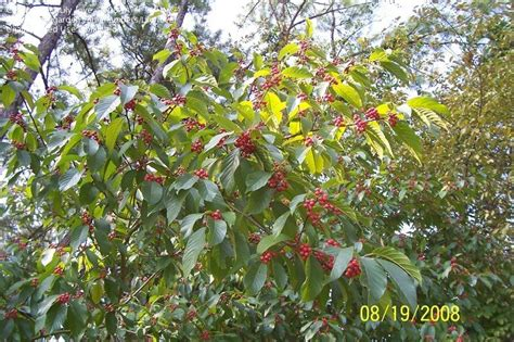fruit tree identifier plant identification closed fruit tree i d 1 by lily love