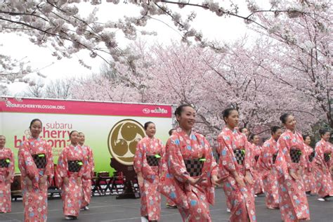 cherry blossom festival related keywords suggestions for japanese cherry blossom
