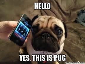 Pug Meme - pug yes
