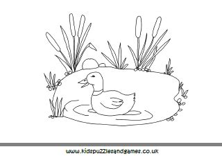 coloring pages ducks in a pond duck in pond colouring pages