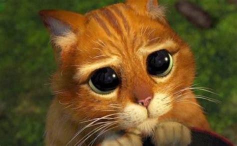imagenes de gatitos llorando comportamientos del gato para llamar la atenci 243 n canal
