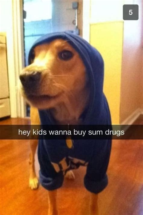 funniest dog snapchats  mastered  art