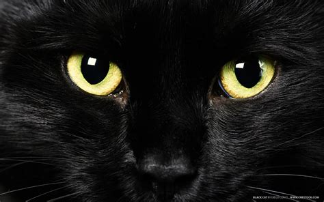 wallpaper yellow cat yellow eyes black cat wallpapers and images wallpapers