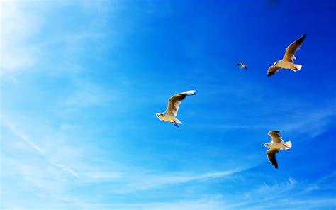tmobile inflight صور حيوانات وطيور جميلة عالية الجودة صور حيوانات متنوعة