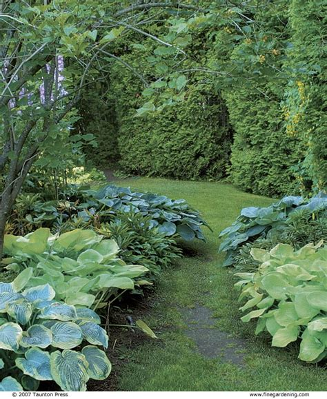 hosta garden ideas 39 best images about hosta garden ideas on