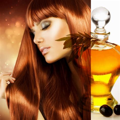 Minyak Zaitun Untuk Rambut cara menghilangkan uban dengan minyak zaitun