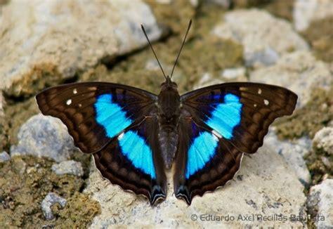 Chopard Borsa Butterfly Purse by 5 Amazing Butterflies Gardening