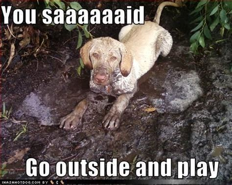 when can puppy go outside the 12 muddiest dogs on the planet iheartdogs