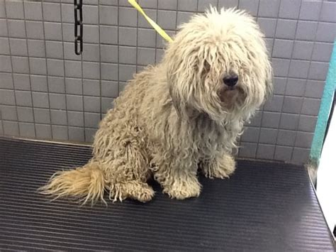 Matted Dogs by Matted Fur Calgary Daycare Grooming