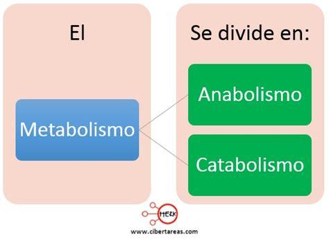 reacciones exotermicas y endotermicas biologia 1 cibertareas metabolismo anabolismo y catabolismo biolog 237 a 1