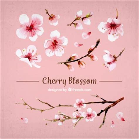 foto fiori di ciliegio fiore di ciliegio foto e vettori gratis