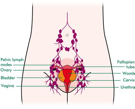 lymph nodes groin diagram diagram of bladder and ovaries diagram free engine image