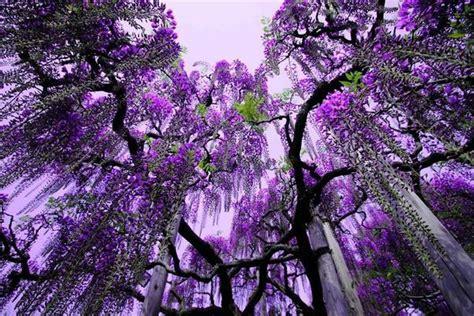 ashikaga flower park beautiful ashikaga flower park japan general interest