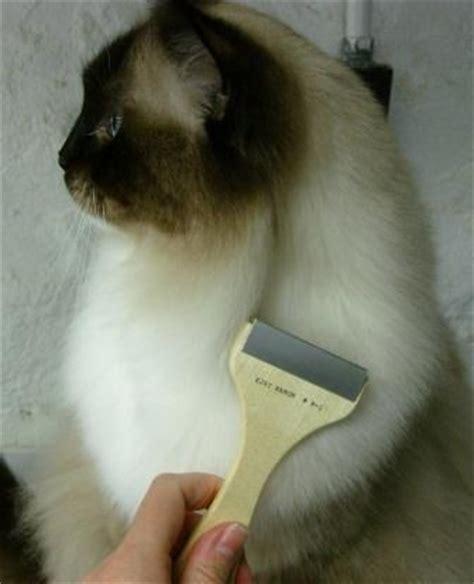 How To Remove Mats From Haired Cats by 220 Ber 1 000 Ideen Zu Katzenfellpflege Auf Katzen Scheren Und Hunde
