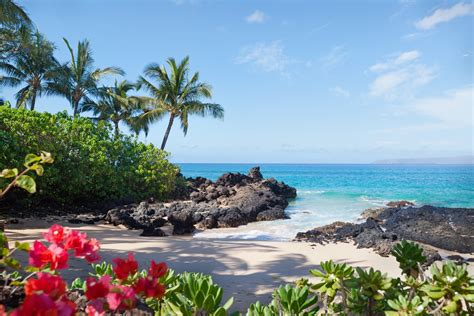cruises zika free 6 zika free beach destinations to visit this winter en