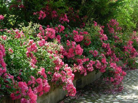 vendita fiori vendita fiori e piante vivaio bologna