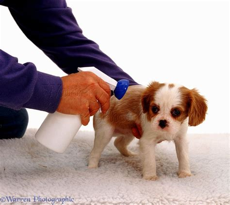 flea treatment for puppies take a chance puppies puppies puppy