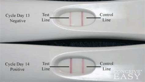 Harga Clear Blue Pregnancy Test check ovulation test page 2 daftar update harga