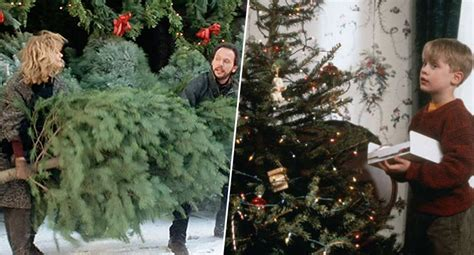 reason for christmas trees disgusting reason you shouldn t trees