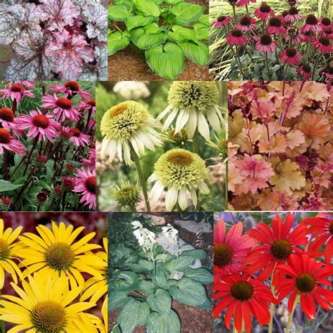 garden plants names and pictures plant names video search engine at search com