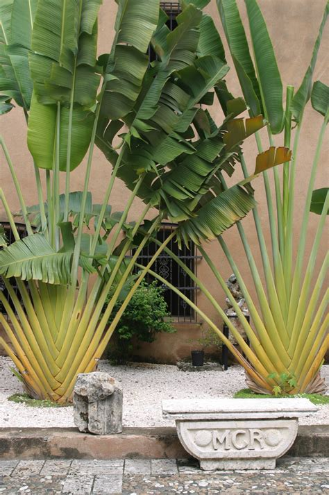 Bild Mit Echten Pflanzen by Museo Real Plants