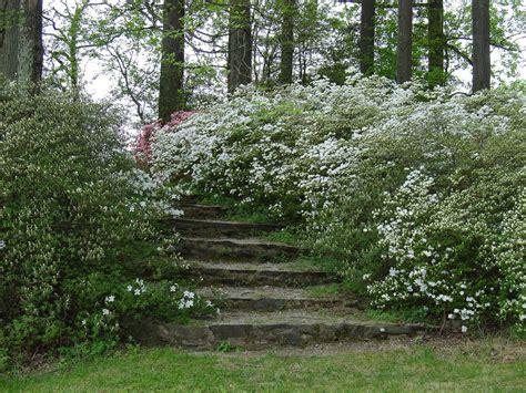brighton dam azalea garden