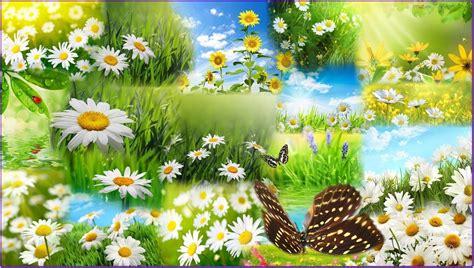 wallpaper desktop spring flowers spring flower desktop backgrounds wallpaper cave
