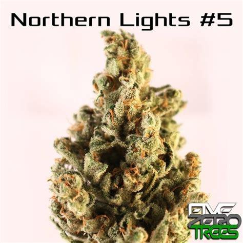 Northern Lights 5 Marijuana Strain Reviews Allbud