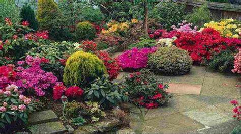 imagenes de flores ornamentales tipos de plantas ornamentales y beneficios