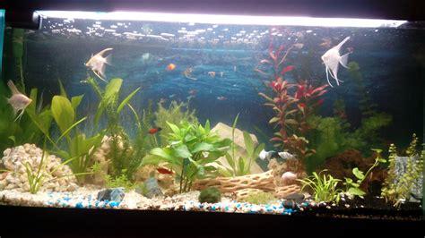 poisson d eau douce pour aquarium aquarium eau douce oscar