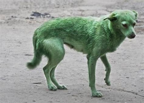 green puppy user the platypi made up breeds part 1 green retriever poochpedia