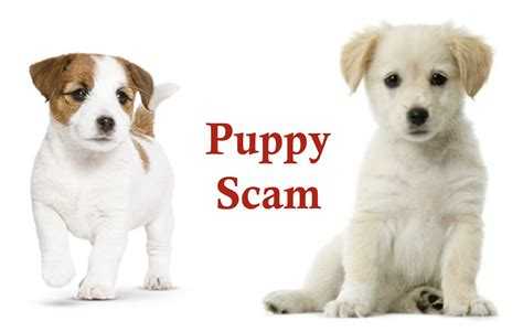 puppy scams consumers warned of puppy scams gallia hometown herald