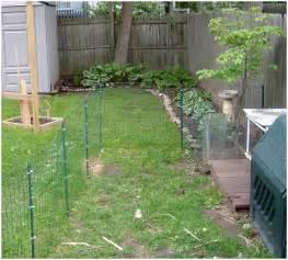 backyard ideas for dogs backyards ergonomic backyard landscaping for dogs