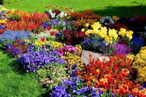 Image Of Flower Garden Flower Garden On 2 New Hd Wallpapers Pictures Free