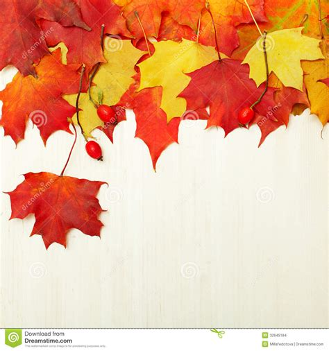 Background Autumn Leaves On White Wood Stock Images Image 32645184 Fall Leaves On White Background