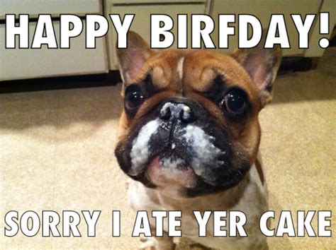 puppies happy birthday happy birthday quotes for dogs quotesgram