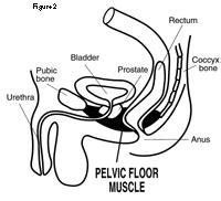 pelvic floor relaxation thefloors co