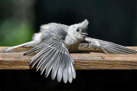 why do birds sunbathe sunning